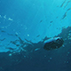 Bubble Raise To Sea Surface - VideoHive Item for Sale