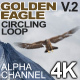Golden Eagle Circling Ver 2 - VideoHive Item for Sale