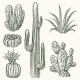 Hand Drawn Vector Cactus - GraphicRiver Item for Sale
