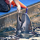Hand Feeding A Dolphin At The Zoo - VideoHive Item for Sale