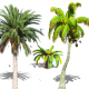 Palms Collection  - VideoHive Item for Sale