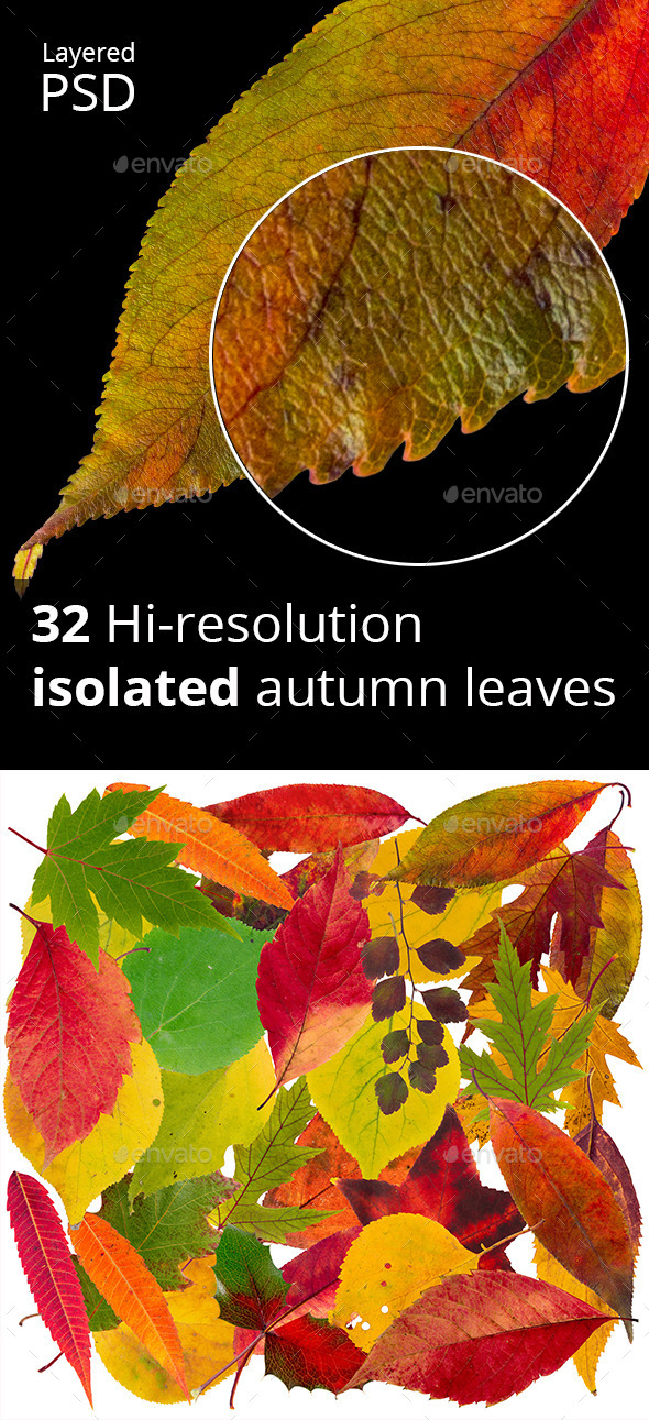 32 hi-res Isolated autumn leaves PSD - Nature & Animals Isolated Objects