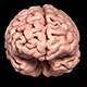 Human Brain 3D Scan Model - 3DOcean Item for Sale
