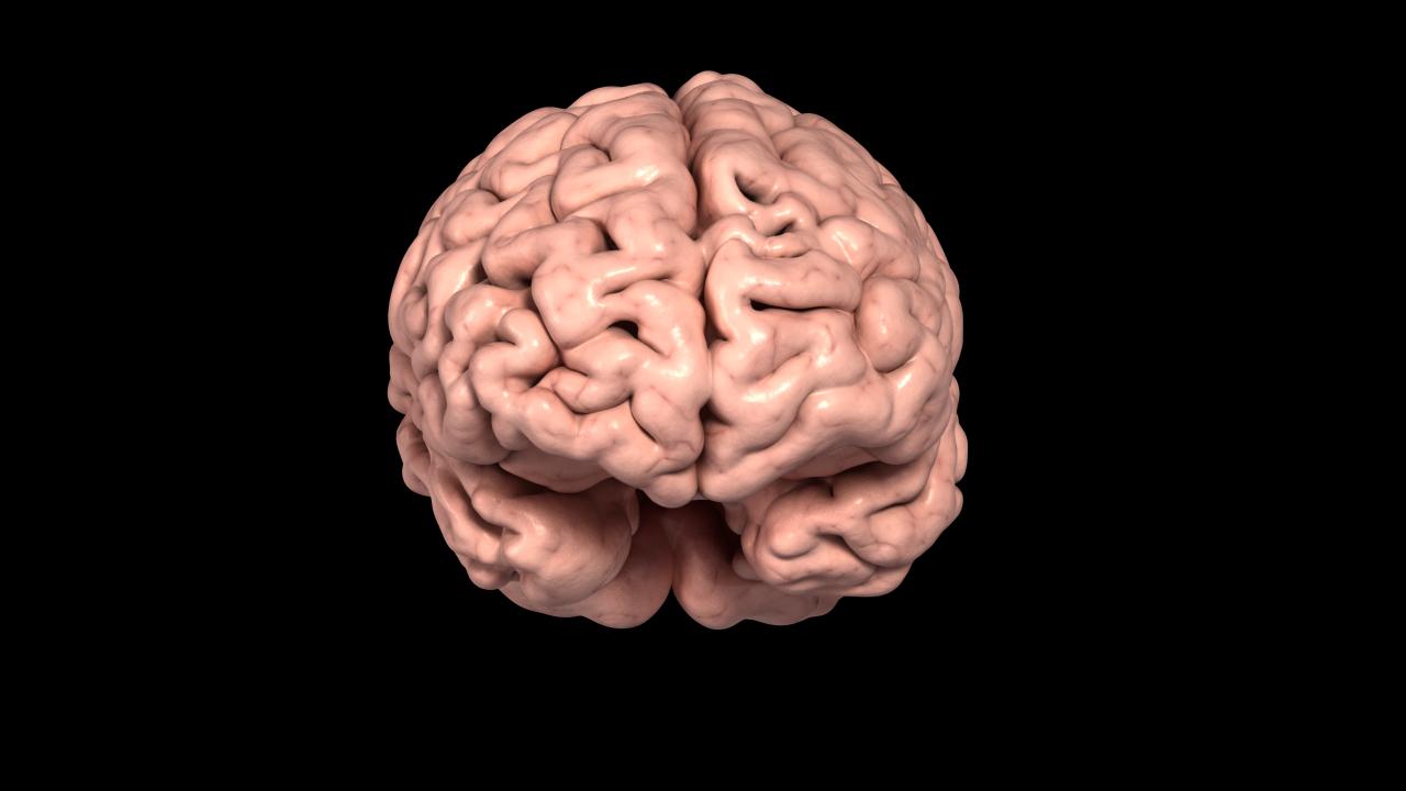 human brain 3d scan model by red5five 3doceanhuman brain 3d scan model 3docean item for sale · a_brain_still_01 jpg b_brain_still_02 jpg