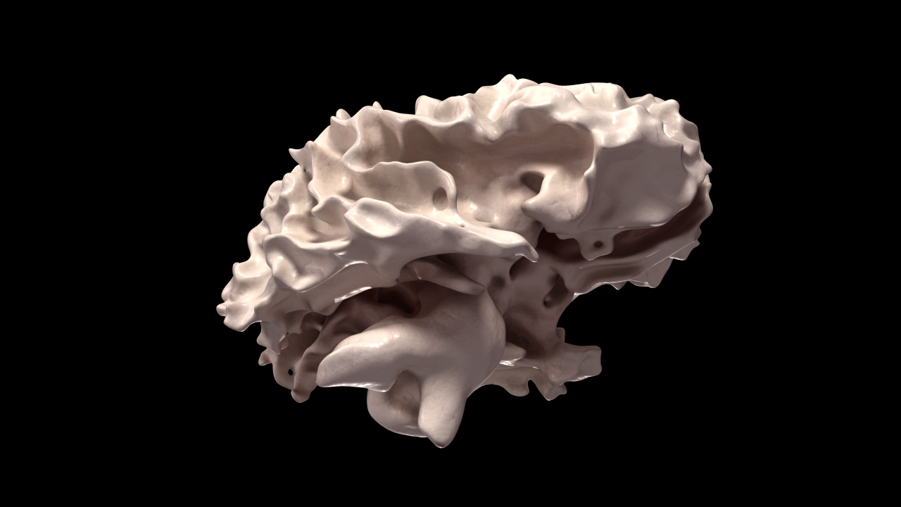 Human Brain 3d Scan Model By Red5five 3docean