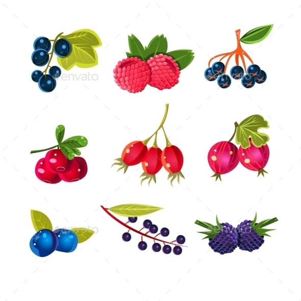Juicy Colorful Berry Set  - Food Objects
