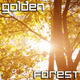 Sunlight Golden Forest - VideoHive Item for Sale