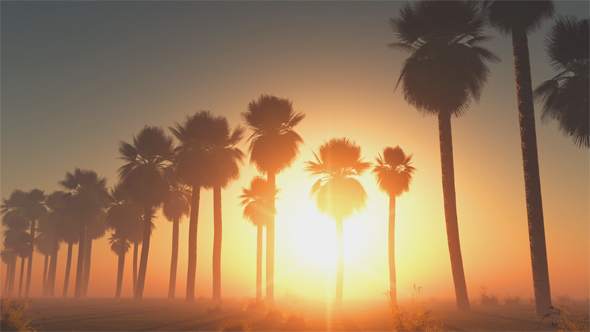 Palms at Sunset in Desert