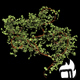 Bush Ivy Growing 02 - VideoHive Item for Sale