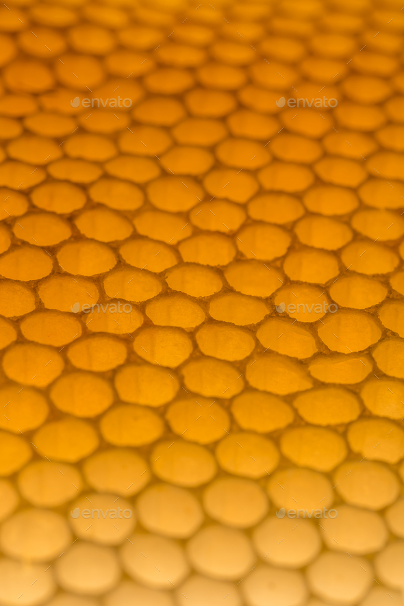 Honeycomb - Stock Photo - Images