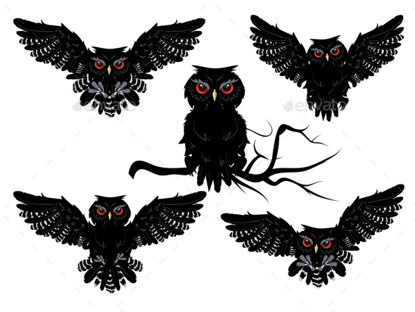 Black Owl - Animals Characters