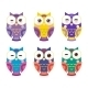 Set Bright Colorful Owls On White Background - GraphicRiver Item for Sale