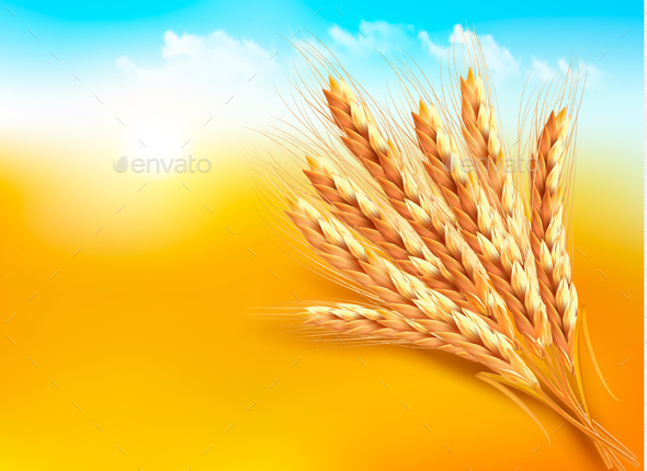 Ears Of Wheat Vector - Flowers & Plants Nature