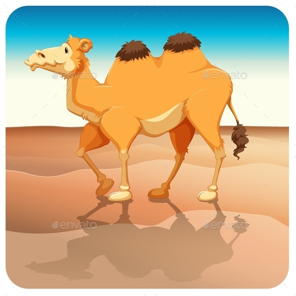 Camel - Animals Characters