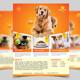 Pets Shop Flyer Template - GraphicRiver Item for Sale