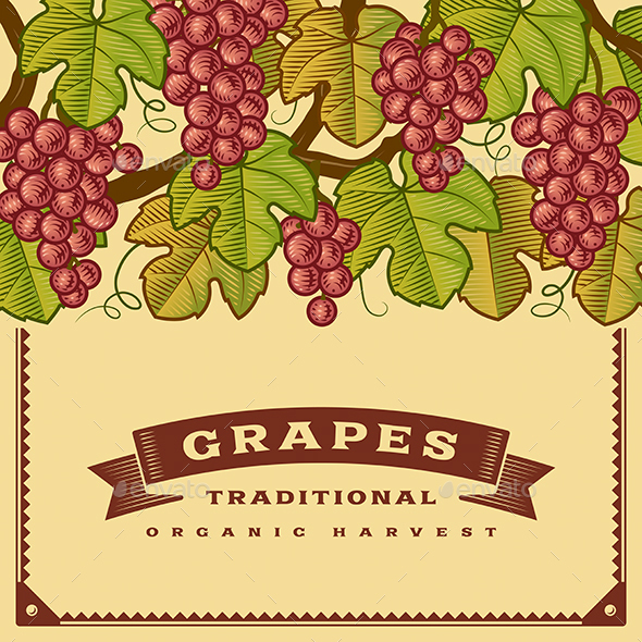 Retro Grapes Harvest Card