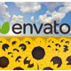 Sunflower Logo - VideoHive Item for Sale