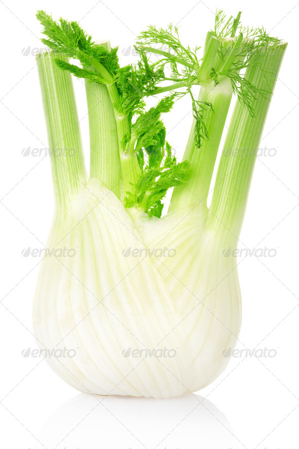 Fennel - Stock Photo - Images