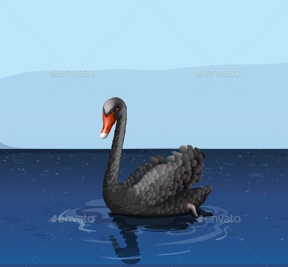 Black Swan - Animals Characters