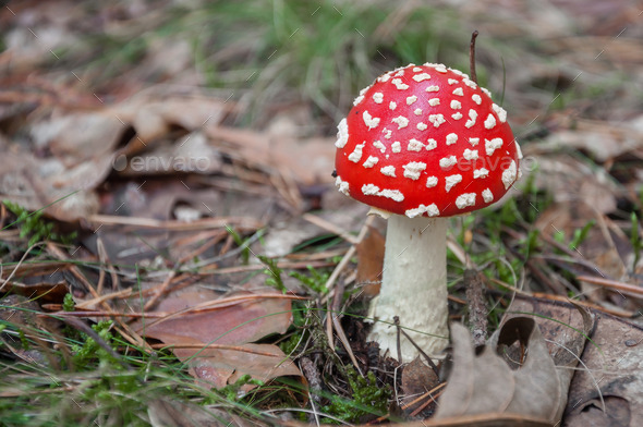 Red toadstool in a forest - Stock Photo - Images