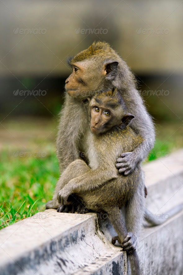 Monkey Love - Stock Photo - Images