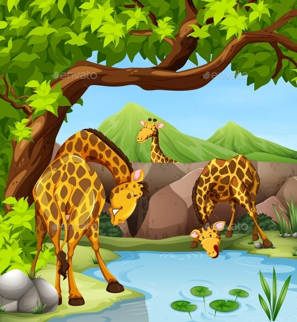Giraffe Drinking Water from the Pond - Animals Characters