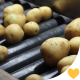Industry Potatoes Production Line - VideoHive Item for Sale