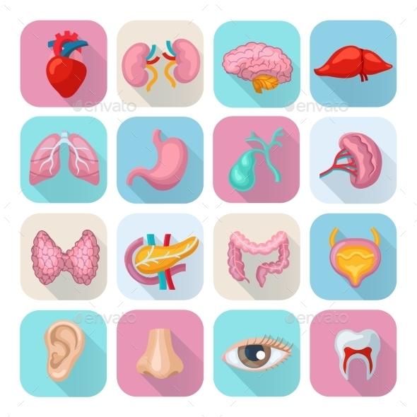 Human Organs Set - Miscellaneous Icons