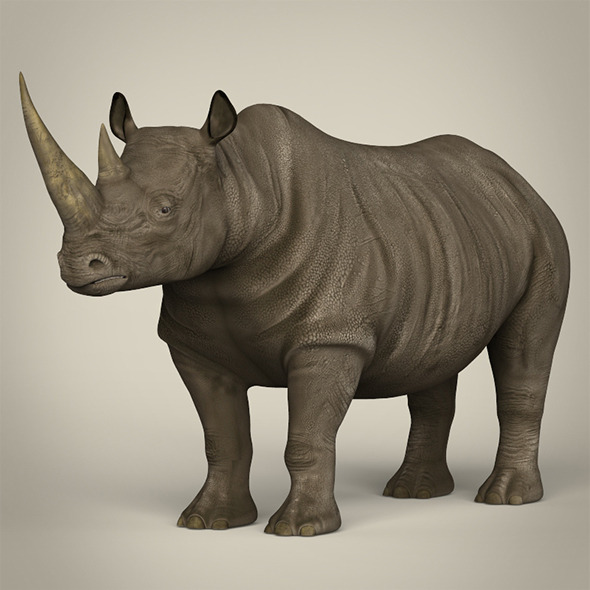 Realistic Rhinoceros - 3DOcean Item for Sale