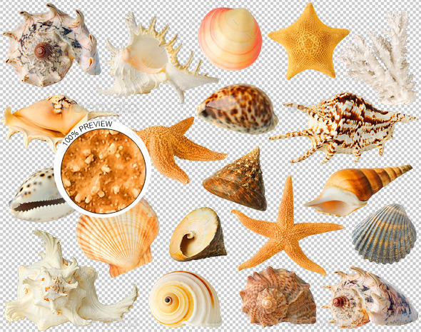 20 Sea Shells - Nature & Animals Isolated Objects