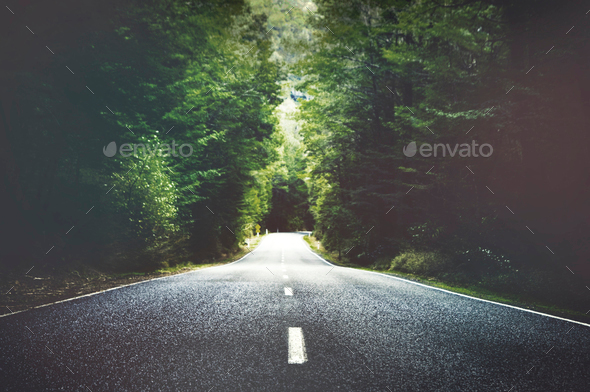 Summer Country Road With Trees Beside Concept - Stock Photo - Images