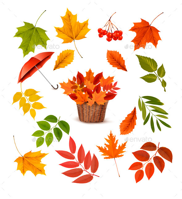 Set of Colorful Autumn Leaves and Objects - Flowers & Plants Nature