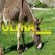 Donkey 5 - VideoHive Item for Sale