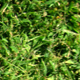 Grass Texture - GraphicRiver Item for Sale