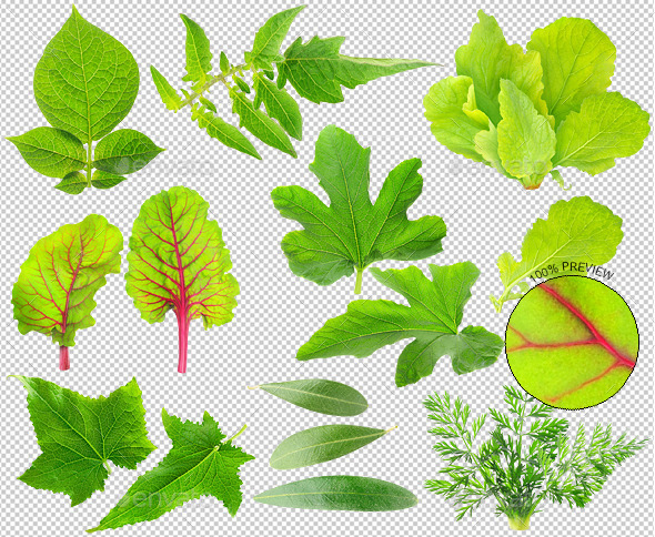 Leaves of vegetable plants - Nature & Animals Isolated Objects