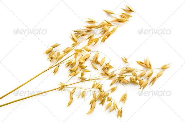 Stalks of oats - Stock Photo - Images