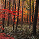 Autumn Forest 1 - VideoHive Item for Sale