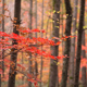 Autumn Forest 2 - VideoHive Item for Sale