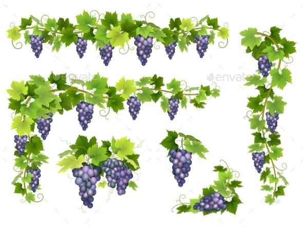 Blue Grapes Bunch Set - Flowers & Plants Nature