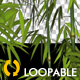 Bamboos - Windy Shrubs - VideoHive Item for Sale