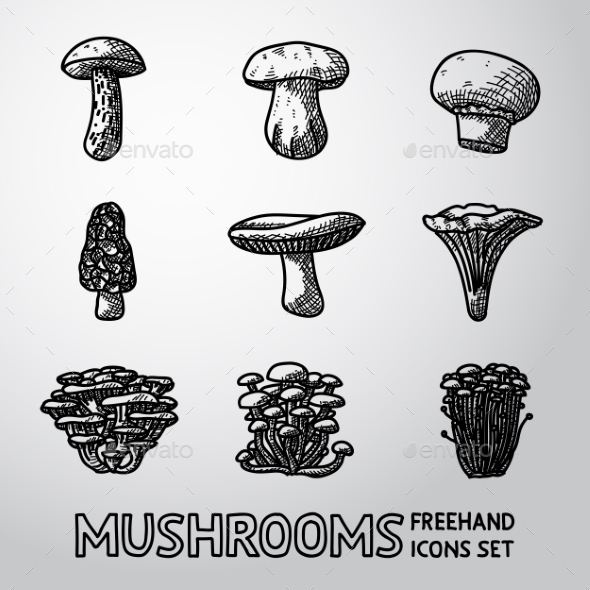Set of Freehand Mushroom Icons - Food Objects