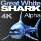 Great White Shark 1 - VideoHive Item for Sale