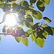 Leaves & Sun - VideoHive Item for Sale