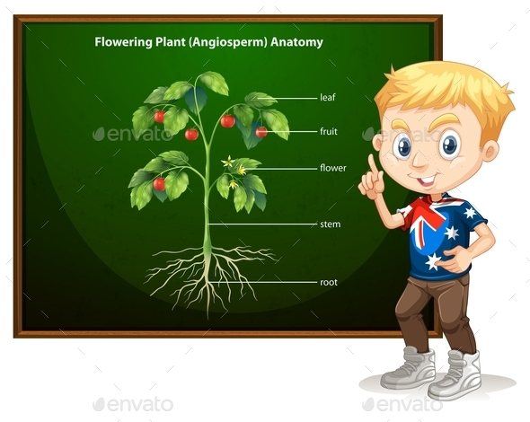 Little Boy and Flowering Anatomy - People Characters