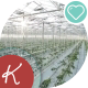 A Large Greenhouse, a Lot Of Long Rows Of Plants - VideoHive Item for Sale