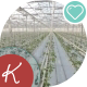 The Huge Greenhouse - VideoHive Item for Sale
