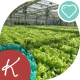 Huge Beds With Lettuce In The Greenhouse - VideoHive Item for Sale