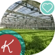 Large Industrial Greenhouses. Green Beds - VideoHive Item for Sale