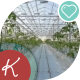 Industrial Greenhouses, Many Rows Of Green Plants. - VideoHive Item for Sale
