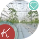 A Large Greenhouse, a Lot Of Long Rows Of Plants. - VideoHive Item for Sale
